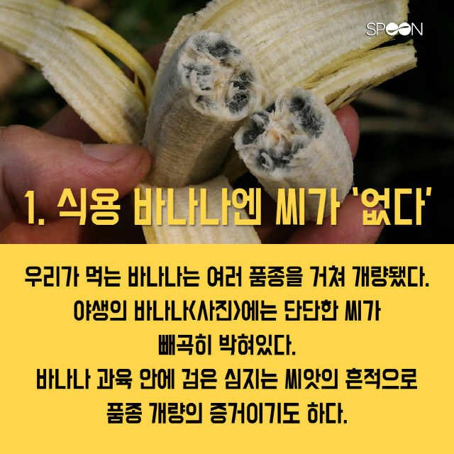 알고 먹으면 더 특별한 바나나의 비밀